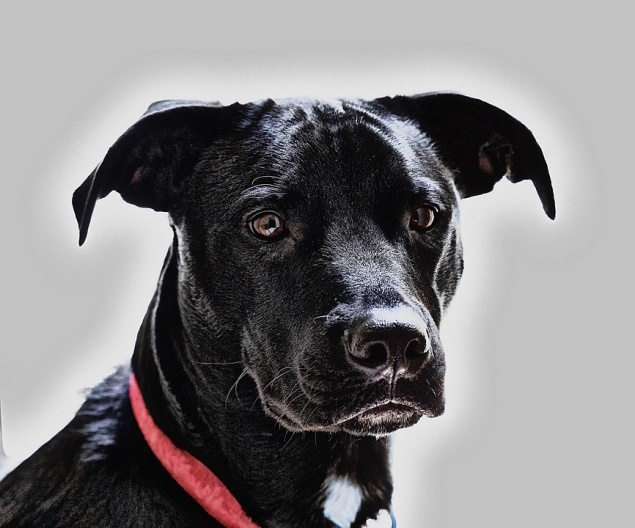 dog with collar facing camera