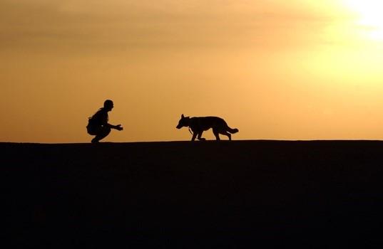 dog coming to human