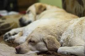 dogs sleeping