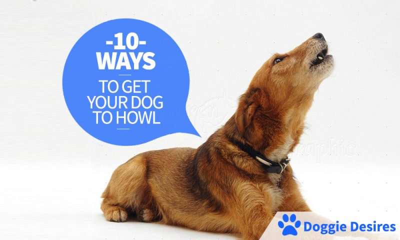 10 Ways To Get Your Dog To Howl