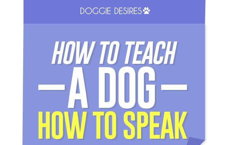 how to teach a dog how to speak