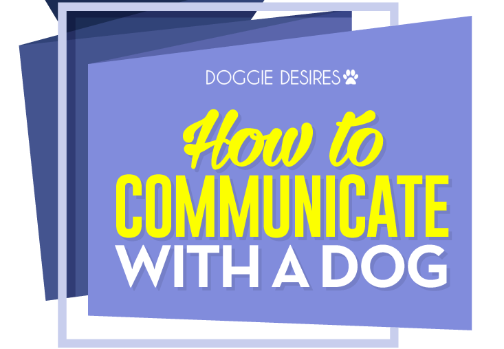 how to communicate with a dog