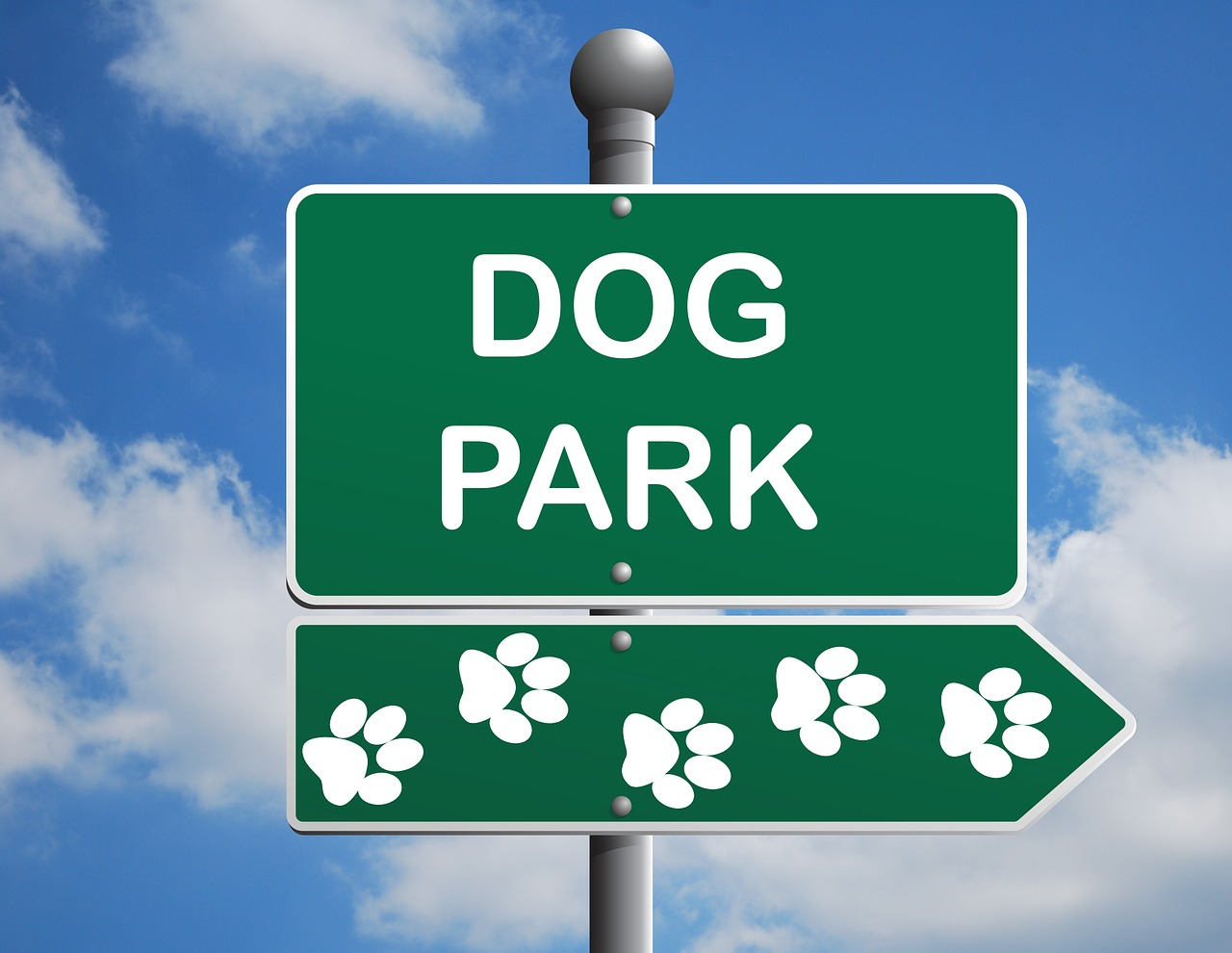 Where To Take Your Dog for Some Fun