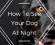 How To See Your Dog At Night