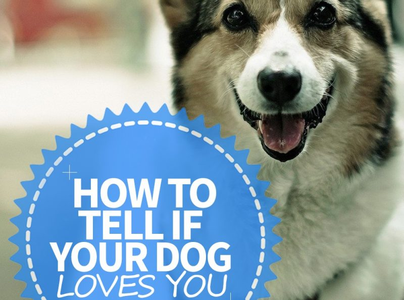 how to tell if your dog loves you