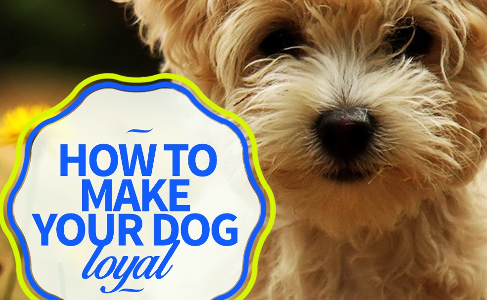 how to make your dog loyal