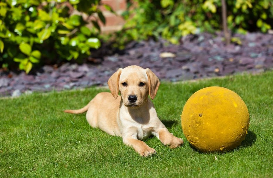 most trainable dog breeds