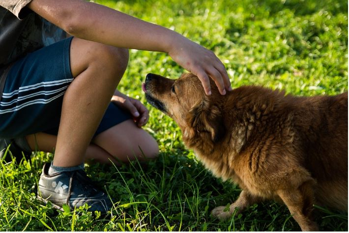 ways to get your dog to trust you