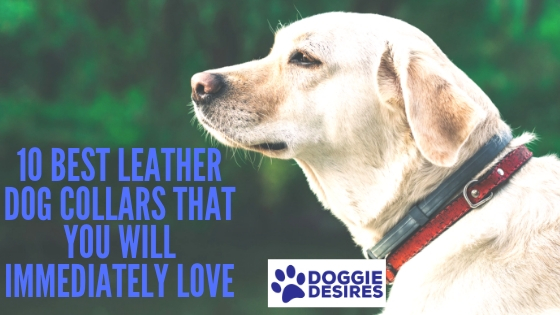 10 Best Leather Dog Collars That You Will Immediately Love