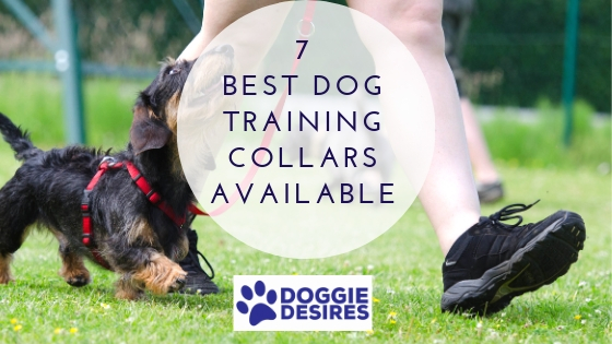 Best Dog Training Collars Available (1)