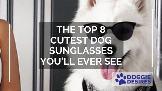 featured image for THE TOP 8 CUTEST DOG SUNGLASSES YOU'LL EVER SEE