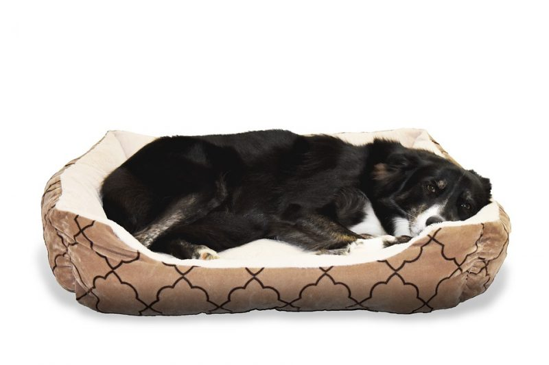 black dog in a comfortable dog bed during dog neutering