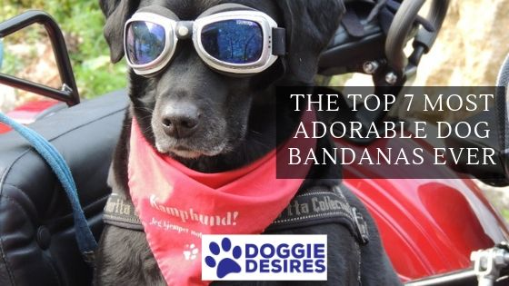 The Top 7 Most Adorable Dog Bandanas Ever featured post image
