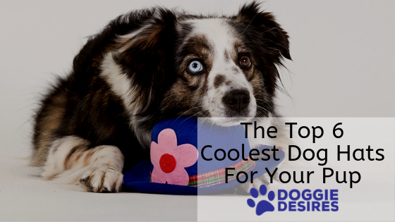 Top Top 6 Coolest Dog Hats For Your Pup feature image