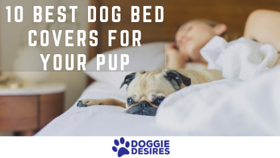 10 Best Dog Bed Covers For Your Pup