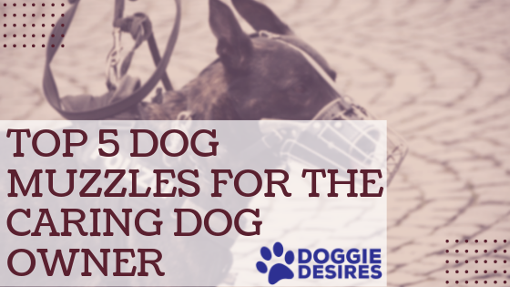 Top 5 Dog Muzzles for The Caring Dog Owner