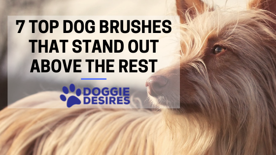 7 Top Dog Brushes That Stand Out Above the Rest