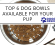 Top 6 Dog Bowls Available for Your Pup