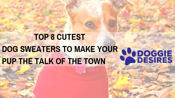 Top 8 Cutest Dog Sweaters To Make Your Pup The Talk of the Town