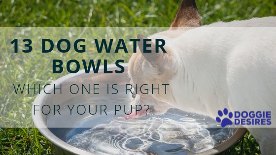 13 Dog Water Bowls_ Which One is Right for Your Pup_