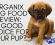 Organix Dog Food Review: A Good Choice For Your Pup?
