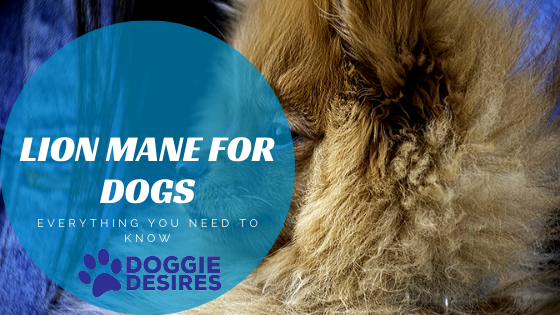 Lion Mane for Dogs_ Everything You Need to Know